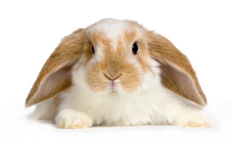 885903__cute-baby-bunny_p